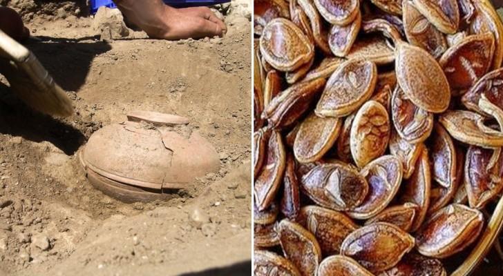Sie fanden 800 Jahre altes Saatgut und pflanzten es ein. Wir zeigen euch, was dabei rauskam...