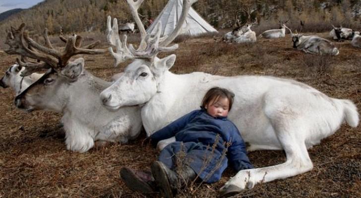 Le fotografie mozzafiato di una tribù che vive in simbiosi con le renne