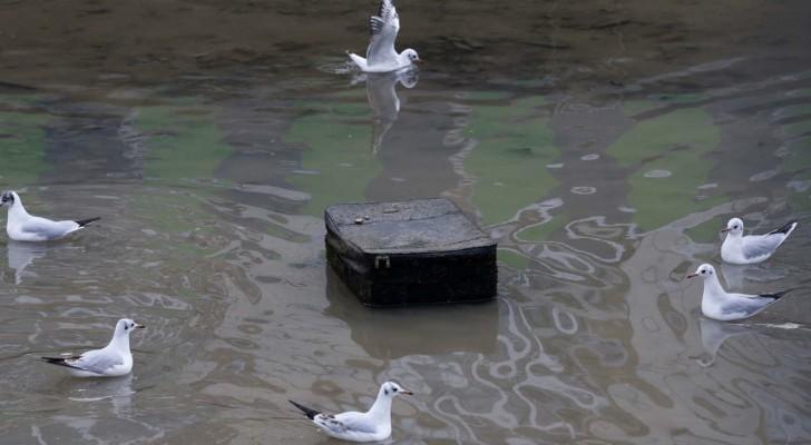 Als man einen Kanal in Paris nach 15 Jahren zum ersten Mal entwässerte, kam das hier zum Vorschein...