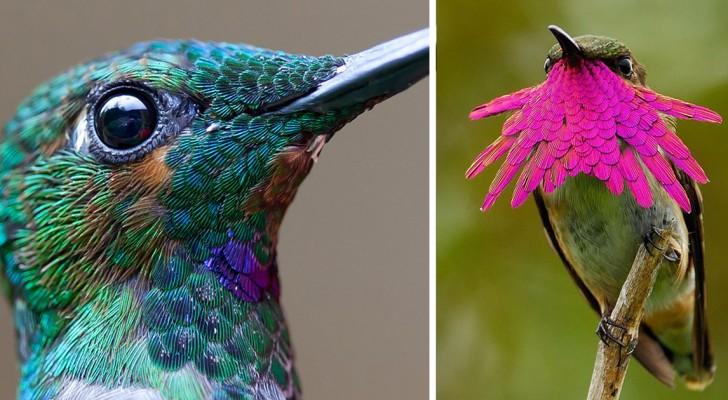 20 images merveilleuses qui révèlent l'incroyable beauté du colibri