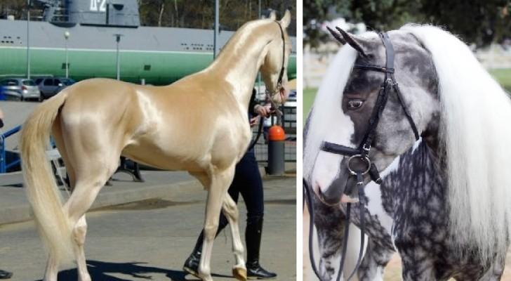 Paarden - Canape roma huis van de wereld ...