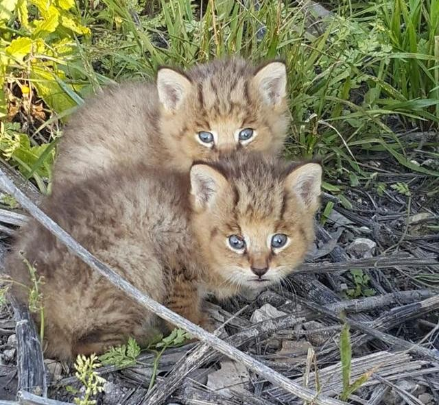 Trova Dei Gattini Abbandonati Per Strada Ma Poi Scopre Che Non Sono