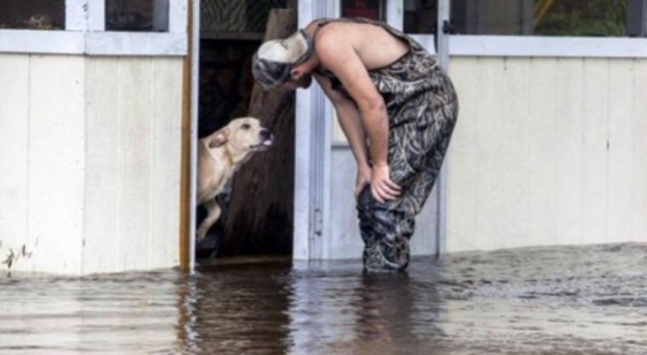 Een man ziet een hond die in de steek is gelaten tijdens een overstroming: de ontmoeting verandert hun levens