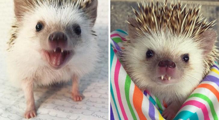 Elle met sur internet les images de son hérisson « vampire »... et il devient une star!