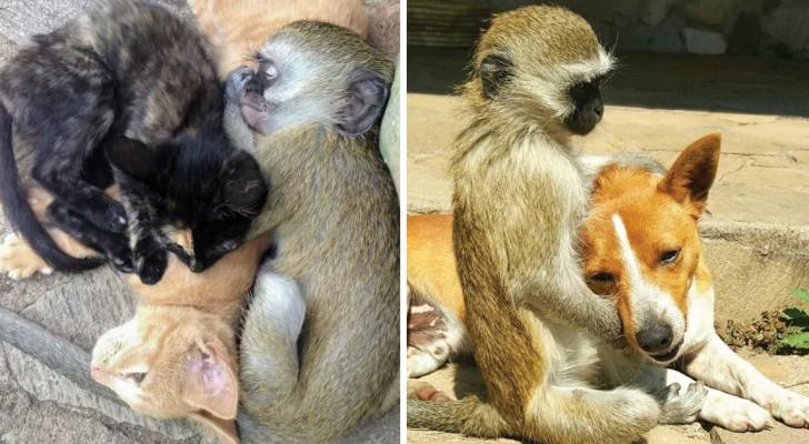 Una scimmia orfana arriva nel rifugio: il suo comportamento può insegnarci qualcosa