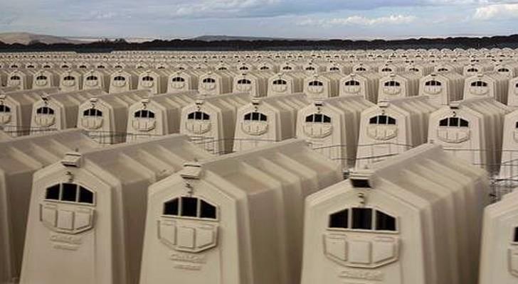 All die Grausamkeit der intensiven Tierhaltung – eingefangen in einem unglaublichen Foto