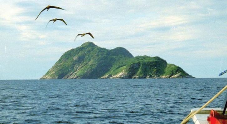 Voici l'île aux serpents: un paradis fascinant... duquel il est préférable de rester à l'écart