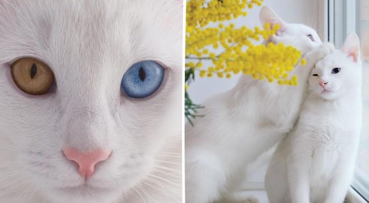 Cette chatte est fascinante, mais attendez de la voir avec sa sœur...