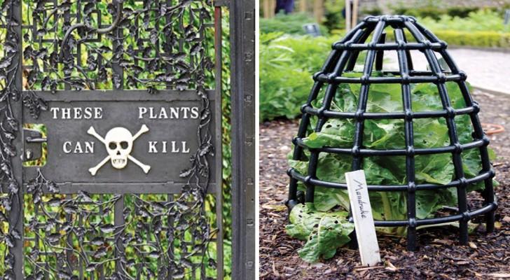 Plantes toxiques en provenance du monde entier : découvrez avec nous le « jardin des poisons »